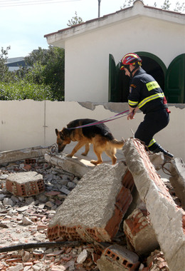 dog_handler_dog_training_rescue