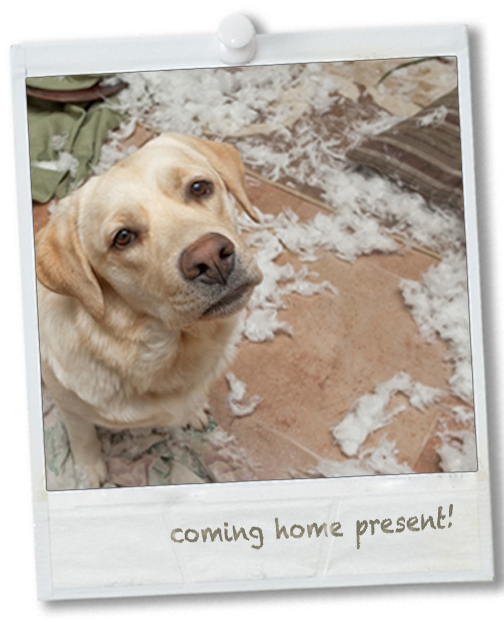polaroid-anxious-dog-bedding-destroyed
