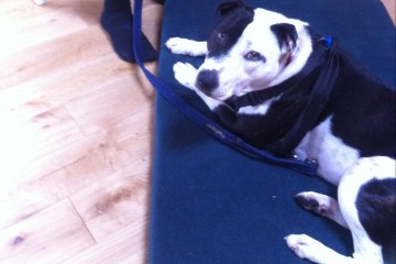about-bruno-dog-testimonial-bach-flower-therapy