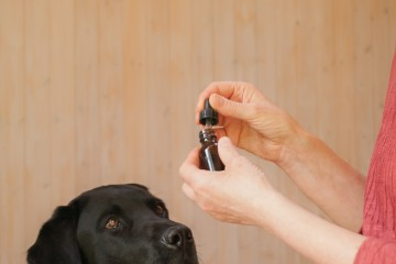 dog-being-treated-with-bach-flower-therapy-drops